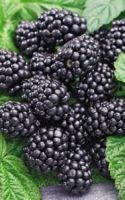 Green Smoothie Recipes With Blackberries