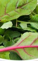 How to Use Radish Leaves In Green Smoothies