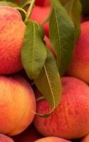 Why You Should Include Peaches in Your Green Smoothie Recipes