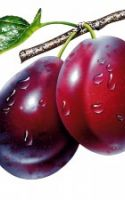 For A Deliciously Nutritious Green Smoothie Recipe, Add Plums!